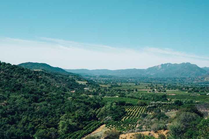 landscape-vineyard.jpg